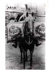 Bays Drum Horse 1904